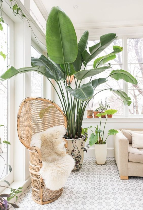 melissa miranda Boston house plantas